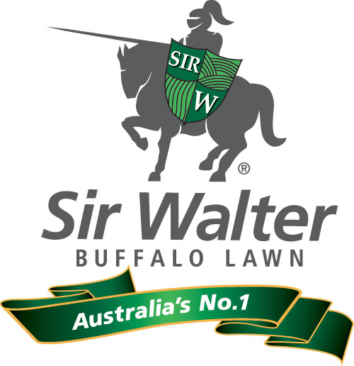 Sir Walter Buffalo Lawn